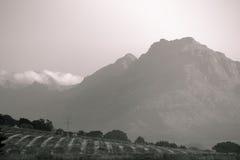 Czarny i biały góry nad winnicą Fotografia Stock