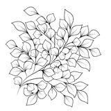Czarny i biały gałąź z liśćmi na odosobnionym Zdjęcia Stock