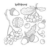 Czarny i biały jesień, spadek owoc i jagody, Obrazy Stock