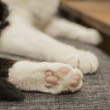 Czarny i biały kot - białe łapy obrazy royalty free