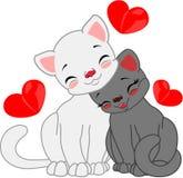 Czarny i biały kot miłość Obrazy Stock