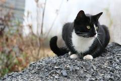Czarny i biały kot siedzi na żwirze Zdjęcie Royalty Free