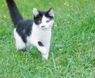 Czarny i biały kot wewnątrz Obrazy Stock