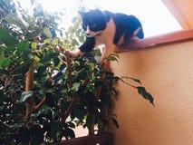 Czarny i biały kota doskakiwanie fotografia stock
