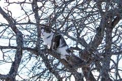 Czarny i biały kota obsiadanie na jabłoni w zima parku obrazy stock