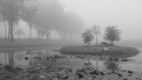 Czarny i biały moment natura z pełnym mgła Obraz Royalty Free