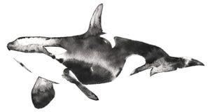 Czarny i biały monochromatyczny obraz z wodą i atrament rysujemy zabójcy wieloryba ilustrację ilustracja wektor