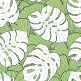 Czarny i biały monstera liścia bezszwowy wzór Obrazy Stock