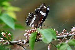 Czarny i biały motyl na zielonych kwiatach zdjęcie royalty free