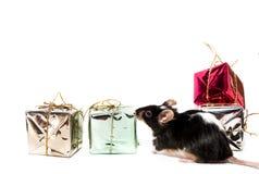 Czarny i biały mysz, boże narodzenie prezenty Zdjęcie Stock