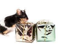 Czarny i biały mysz, boże narodzenie prezenty Zdjęcia Royalty Free