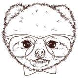Czarny i biały odosobniona pomeranian psia głowa z krawatem i gl Zdjęcie Stock