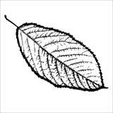Czarny i biały, odosobniony, liścia drzewo Obrazy Royalty Free
