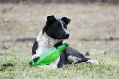 Czarny i biały pies kłama na trawie otwierać klingeryt zieleni butelkę z lemoniadą próbach i obraz royalty free