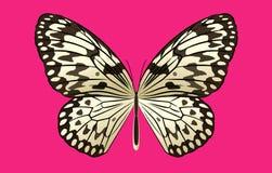 Czarny I Biały Ryżowy Motyli wektor Na Różowym tle Zdjęcie Stock