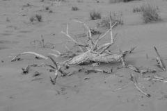 Czarny I Biały strzał suchy, suchy pustynia krajobraz, obraz royalty free