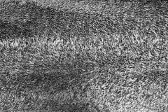 Czarny i biały textured powierzchnia przesmyk wyginać się pazy Zdjęcie Stock