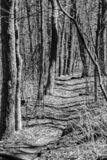 Czarny I Biały wizerunek Appalachian ślad zdjęcia stock