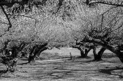 Czarny i biały wizerunek drzewny tunel i drzewny cień w parku zdjęcia stock