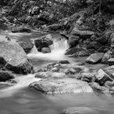 Czarny I Biały wizerunek lasu strumień w drewnach obraz royalty free