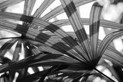 Czarny i biały wizerunku pojęcie Zdjęcie Royalty Free