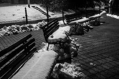 Czarny i biały zim ławki Obraz Stock