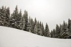 Czarny i biały zimy nowego roku bożych narodzeń halny krajobraz Wysokie sosny zakrywać z mrozem w głębokim jasnym śniegu w zimie fotografia royalty free