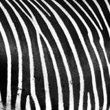 Czarny i biały Obraz Royalty Free