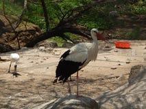 Czarny i biały bird3 Fotografia Royalty Free