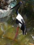 Czarny i biały bird2 Zdjęcia Stock