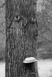 Czarny i biały drewniana twarz Obraz Royalty Free