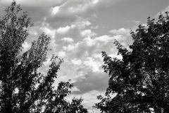 Czarny I Biały drzewa i niebo Obraz Stock