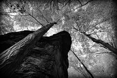 Czarny I Biały drzewa i piaskowa faleza Zdjęcie Stock