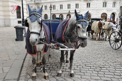 Czarny i biały konie i fracht Zdjęcia Stock