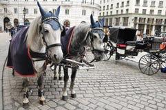 Czarny i biały konie i fracht Obrazy Stock
