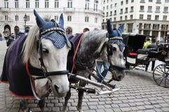 Czarny i biały konie i fracht Obraz Royalty Free