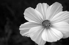 Czarny i biały kosmos Zdjęcia Royalty Free