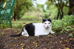 Czarny i biały kot siedzi na parku Obrazy Royalty Free