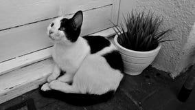Czarny i biały kot w balkonie obrazy royalty free