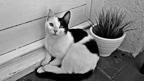 Czarny i biały kot w balkonie zdjęcie royalty free