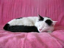 Czarny i biały kota dosypianie Obrazy Stock