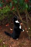 Czarny i bia?y kota polowanie pod drzewem w ogr?dzie zdjęcia royalty free