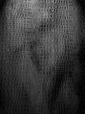 Czarny i biały krokodyl skóra Obraz Stock