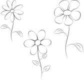 Czarny I Biały kwiat ilustracje Obrazy Royalty Free