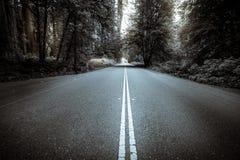 Czarny i biały lasowa droga Zdjęcia Royalty Free
