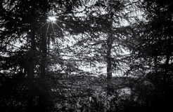 Czarny i biały lasowa sylwetka z starburst Zdjęcie Royalty Free
