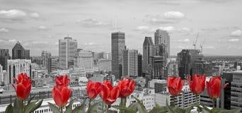 Czarny i biały Montreal Zdjęcia Stock
