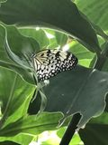 Czarny i biały motyl Fotografia Royalty Free