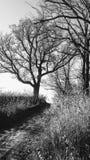 Czarny I Biały natura Zdjęcia Stock