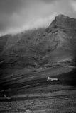 Czarny i biały szczyt Zdjęcie Royalty Free